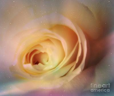 Photograph - Universal Rose by Kristine Nora