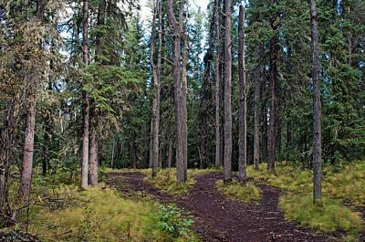 Photograph - University Of Alaska Fairbanks Trail System by Cathy Mahnke