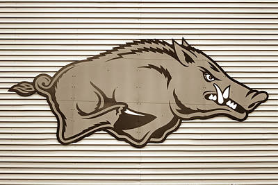 Photograph - University Of Arkansas Razorback On Metal - Sepia Edition by Gregory Ballos