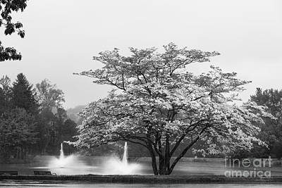 Special Occasion Photograph - University Of Connecticut Landscape by University Icons
