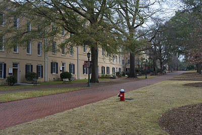 Nic Photograph - University Of South Carolina 2 by Skip Willits