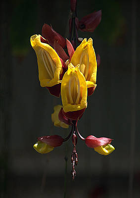 Photograph - Unknown Flower At Sadie Seymour Park by Lori Seaman