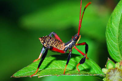 Photograph - Unknown Insect by Larah McElroy