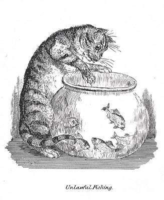 Unlawful Fishing Cat Paws At Goldfish Print by Wellcome Images