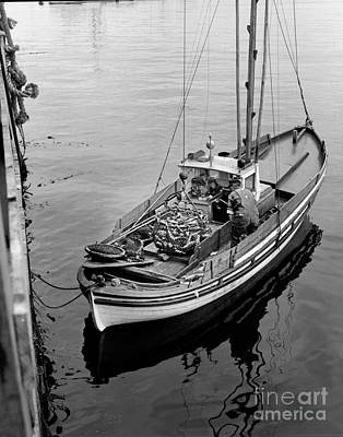 Photograph - Unloading Fish Fom A Monterey Fishing Boat  by California Views Mr Pat Hathaway Archives