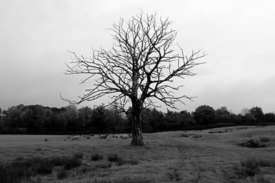 Spot Of Tea - Unlucky tree by Lukasz Ryszka