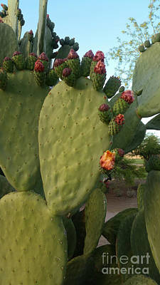 Photograph - Unprickly Prickly Pear Vertical by Heather Kirk