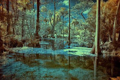 Photograph - Unseen Wetland by Roberto Aloi