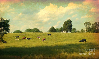 Photograph - Until The Cows Come Home by Beth Ferris Sale