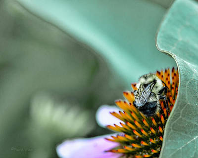 Photograph - Untitled Bee One by Paul Vitko