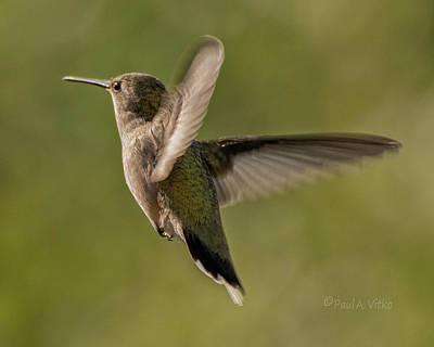 Photograph - Untitled Hum_bird_five by Paul Vitko