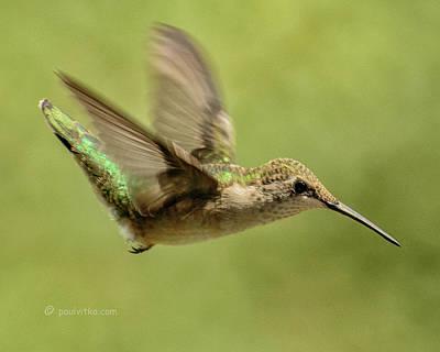 Photograph - Untitled Hum_bird_one by Paul Vitko
