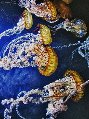 Untitled Print by John Scharle