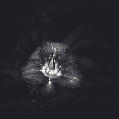 Flowers And Water Drops Wall Art - Photograph - Untitled Lily by Scott Norris