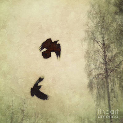 Crow Photograph - Untitled by Priska Wettstein