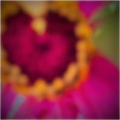 Abstract Flowers Photograph - Untitled Thirty Six by Anonymous  Muse