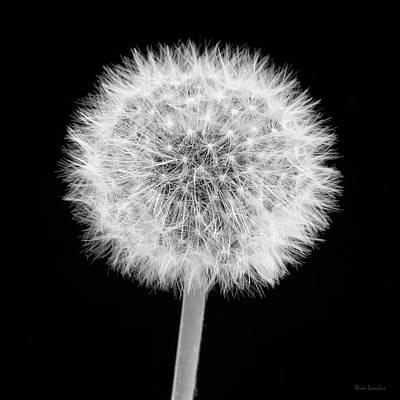 Photograph - Untouched by Wim Lanclus