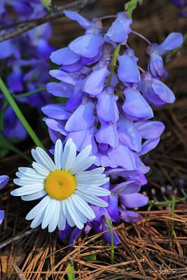 Photograph - Unusual Friends Flower Art by Reid Callaway