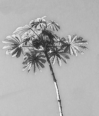 Photograph - Unusual Tree Black And White by Rosalie Scanlon