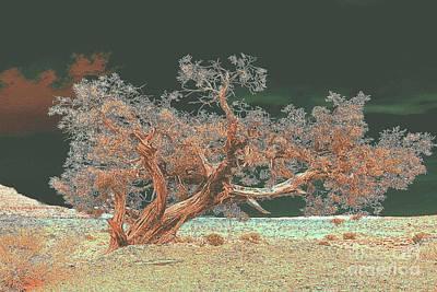 Photograph - Unusual Tree by Merton Allen