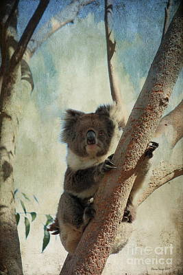 Photograph - Up A Gum Tree by Elaine Teague