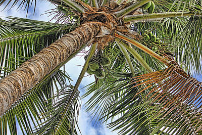 Photograph - Up A Tree by HH Photography of Florida