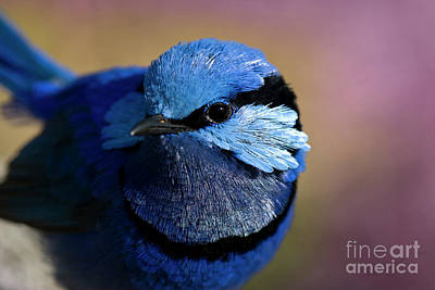 Wren Digital Art - Up Close And Blue by Wendy Slee