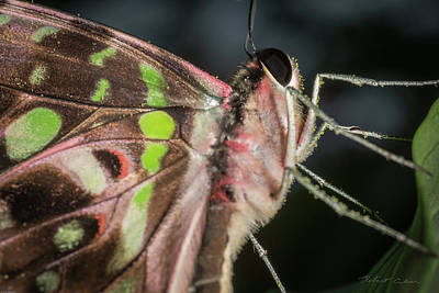 Photograph - Up Close And Personal by Robert Culver