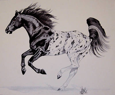 Drawing - Up Close And Personal With Appaloosa's by Cheryl Poland