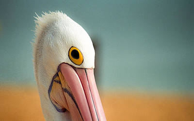 Photograph - Up Close And Personal With My Pelican Friend by T Brian Jones