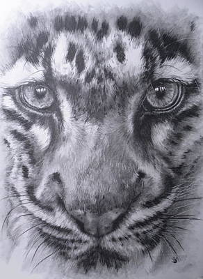 Up Close Clouded Leopard Art Print by Barbara Keith