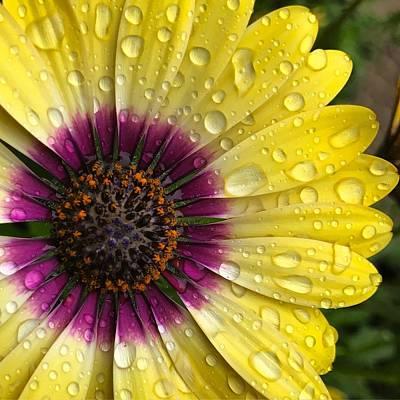 Daisy Up Close  Art Print