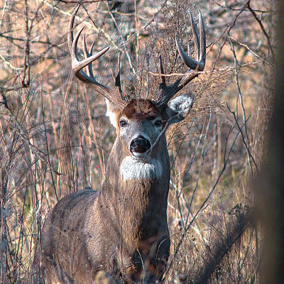 Deer Photograph - Up Close by Garett Gabriel