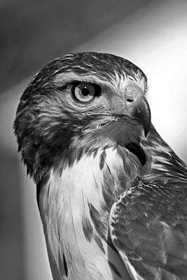 Mauverneen Blevins Photograph - Up Close In Monochrome by Mauverneen Blevins