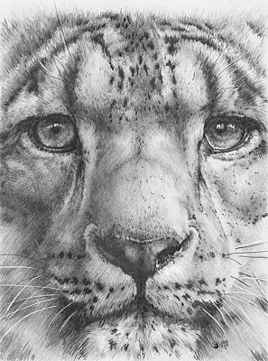 Gouache Mixed Media - Up Close Snow Leopard by Barbara Keith