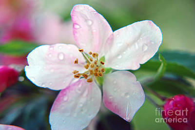 Art Print featuring the photograph Up Close Spring Blossom  by Lila Fisher-Wenzel