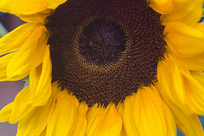 Photograph - Up Close Sunflower by Arlene Carmel