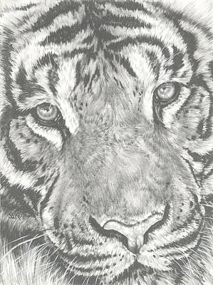 Drawing - Up-close Tiger by Barbara Keith