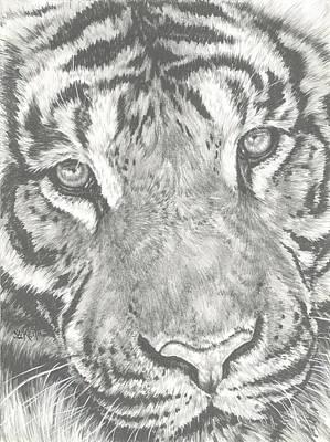 Drawing - Up-close Tiger by Barbara Keith