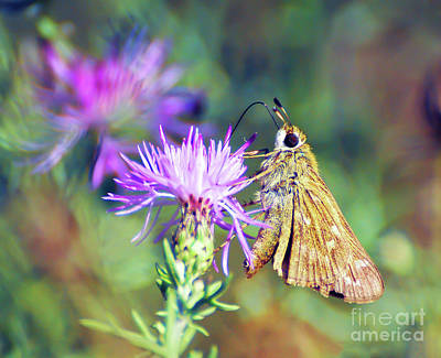 Photograph - Up Close With A Skipper Butterfly by Kerri Farley