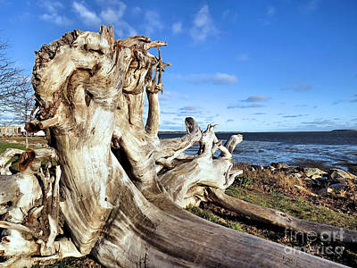 Photograph - Up Close With Driftwood by Janice Drew