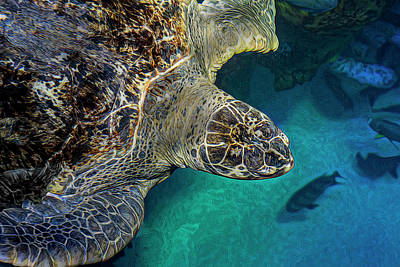 Green Sea Turtle Photograph - Up For Air by Janet Fikar