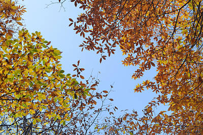 Up In The Air V Autumn Colors Art Print by Guido Montanes Castillo