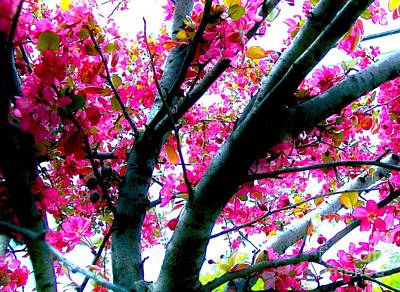 Cherry Blossoms Digital Art - Up In The Cherry Blossom Tree by Marsha Heiken
