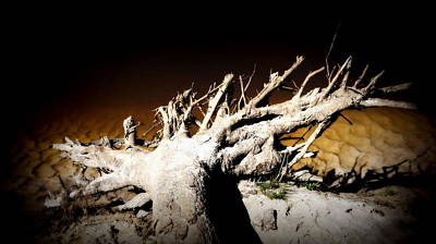 Photograph - Up Rooted  by Laurie Pike