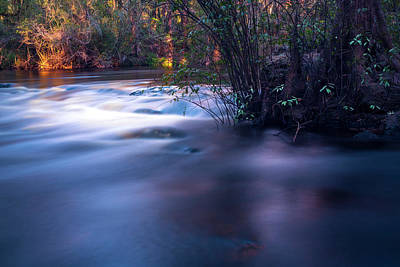 Palmetto Plants Photograph - Up Stream by Marvin Spates