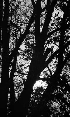 Photograph - Up Through The Trees by Teri Schuster