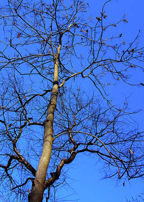 Photograph - Up To The Blue Sky by Reynaldo Williams