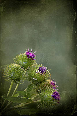 Thistle Photograph - Up To The Point by Evelina Kremsdorf