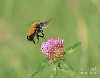 Bee Photograph - Up Up And Away by Gary Wing